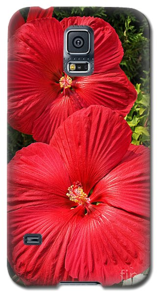 Galaxy S5 Case featuring the photograph Hardy Hibiscus by Sue Smith