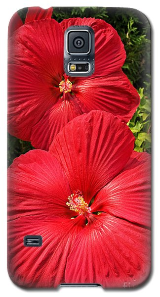 Hardy Hibiscus Galaxy S5 Case