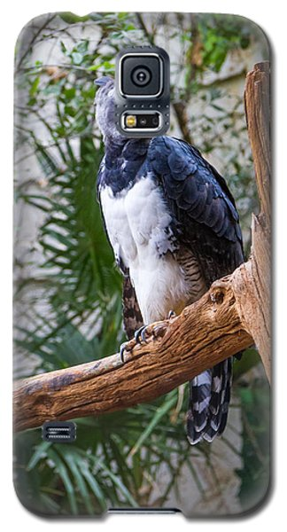 Harpy Eagle Galaxy S5 Case