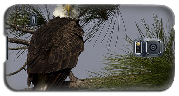 Harriet The Bald Eagle Galaxy S5 Case