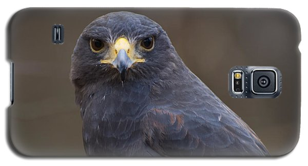 Harris Hawk Galaxy S5 Case by Chris Flees