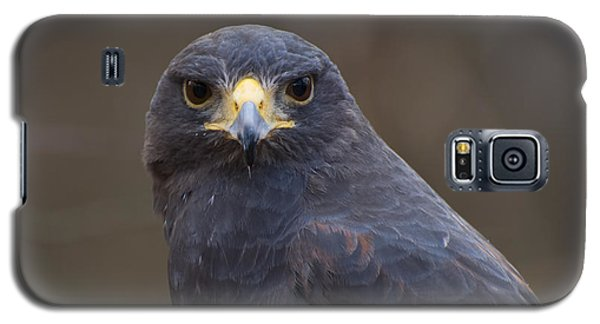 Harris Hawk Galaxy S5 Case