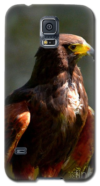 Harris Hawk In Thought Galaxy S5 Case by Pravine Chester