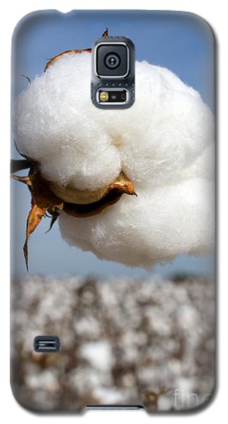 Harvest Ready Cotton Boll Galaxy S5 Case