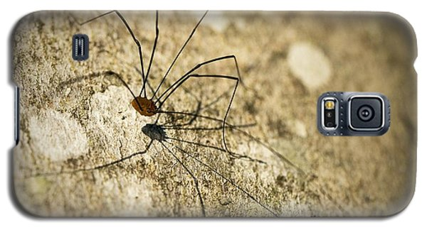 Galaxy S5 Case featuring the photograph Harvestman Spider by Chevy Fleet