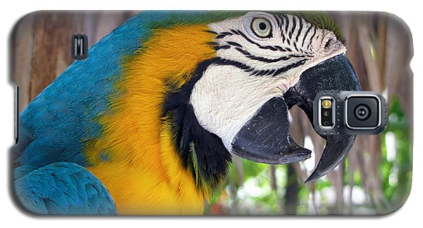 Harvey The Parrot 2 Galaxy S5 Case