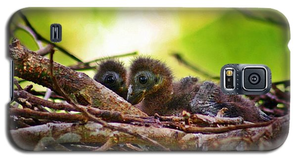 Galaxy S5 Case featuring the photograph Hoatzin Hatchlings In The Amazon by Henry Kowalski