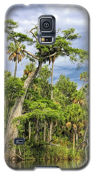 Hatrack Cypress Galaxy S5 Case