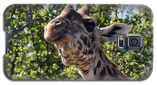 Haughty Giraffe Galaxy S5 Case by AnneKarin Glass