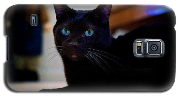 Havana Brown Cat Galaxy S5 Case