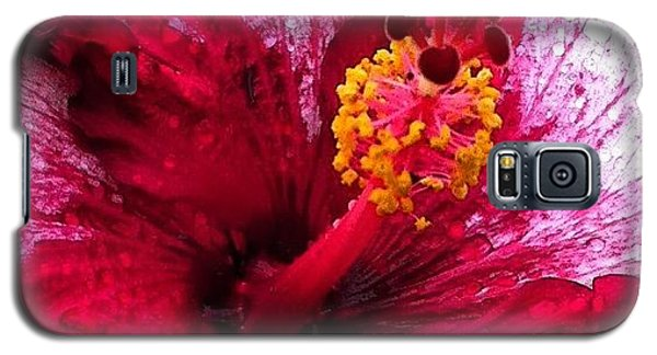Igaddict Galaxy S5 Case - #hawaii #igaddict #igdaily #igtube by Brian Governale