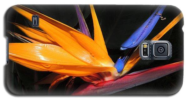 Hawaiian Bird Of Paradise Galaxy S5 Case by Kristine Merc