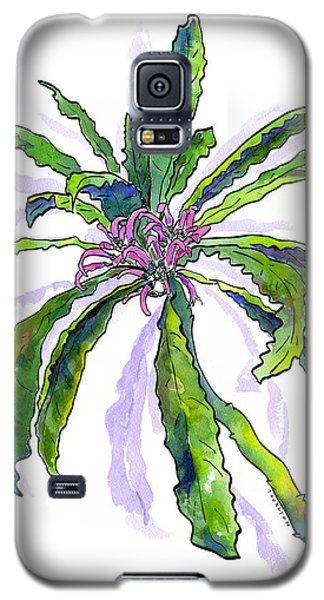 Hawaiian Haha Plant Cyanea Stictophylla Galaxy S5 Case