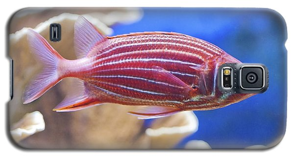Hawaiian Squirrelfish Galaxy S5 Case
