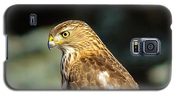 Hawk 2 Galaxy S5 Case