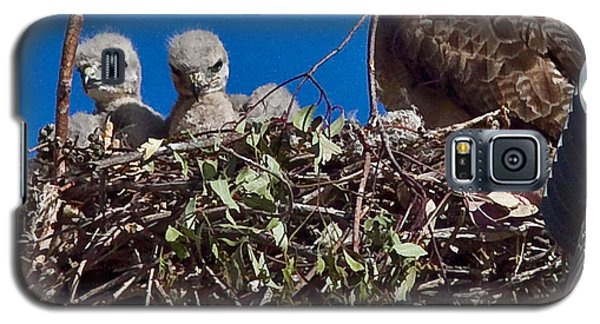 Galaxy S5 Case featuring the photograph Hawk Babies by Brian Williamson