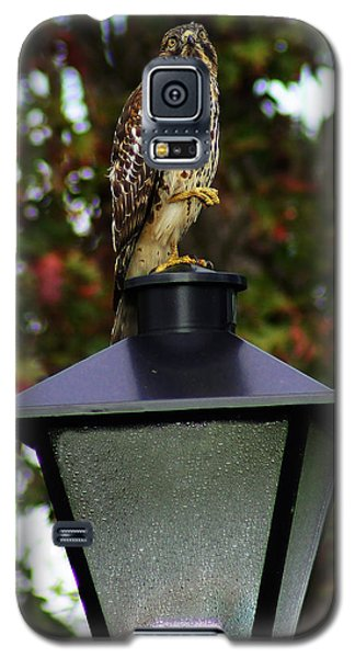Galaxy S5 Case featuring the photograph Hawk Dancing by B Wayne Mullins