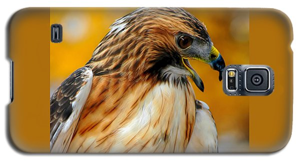 Galaxy S5 Case featuring the photograph Hawk Hunt by Adam Olsen