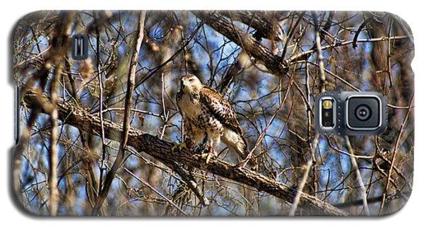 Hawk In A Tree Galaxy S5 Case by Rick Friedle