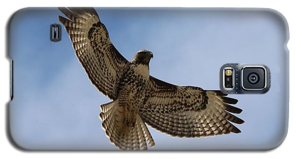 Galaxy S5 Case featuring the photograph Hawk In Flight  by Christy Pooschke