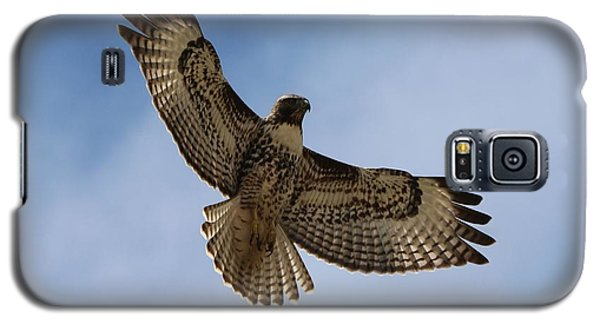 Hawk In Flight  Galaxy S5 Case by Christy Pooschke