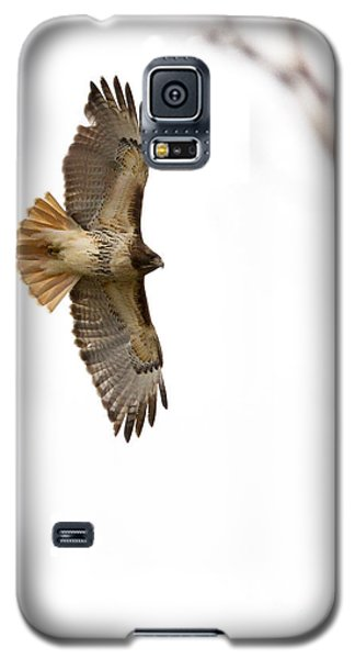 Hawk In Flight Galaxy S5 Case