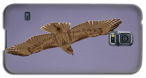 Hawk In Flight Galaxy S5 Case
