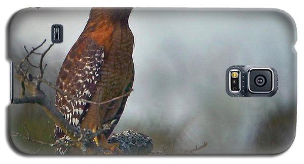 Hawk In The Mist Galaxy S5 Case