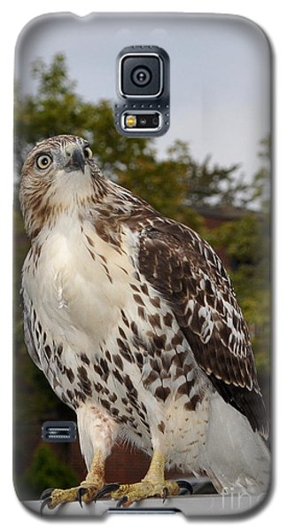 Hawk Galaxy S5 Case