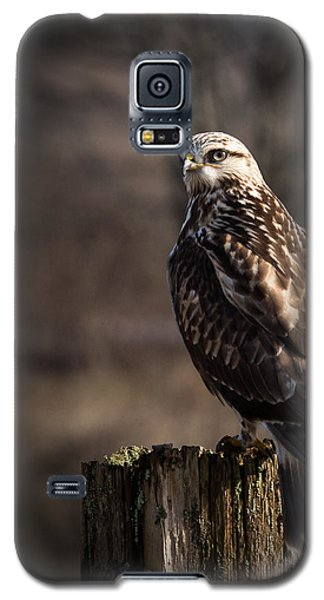 Hawk On A Post Galaxy S5 Case