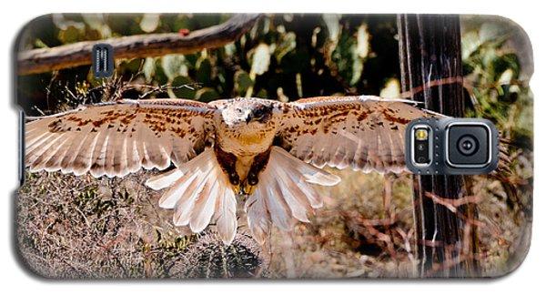 Hawk On The Hunt Galaxy S5 Case by Bonnie Fink