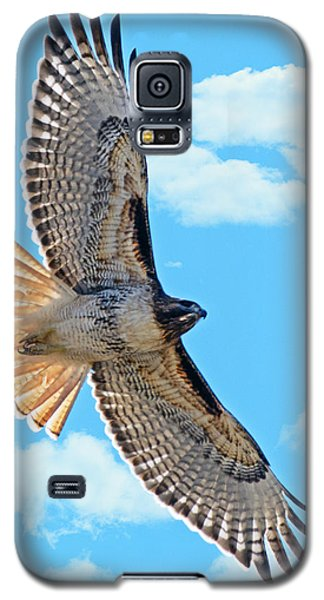 Galaxy S5 Case featuring the photograph Hawk Overhead by Stephen  Johnson