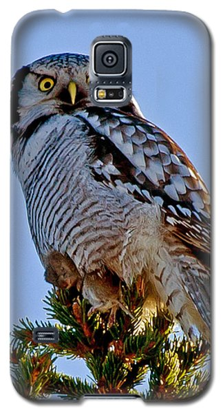 Hawk Owl Square Galaxy S5 Case by Torbjorn Swenelius