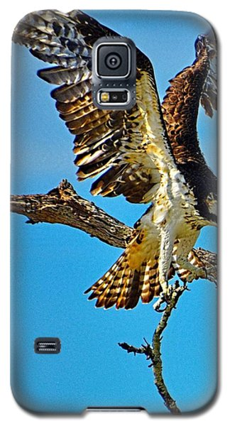 Galaxy S5 Case featuring the photograph Hawk's Heavy Load by Pamela Blizzard
