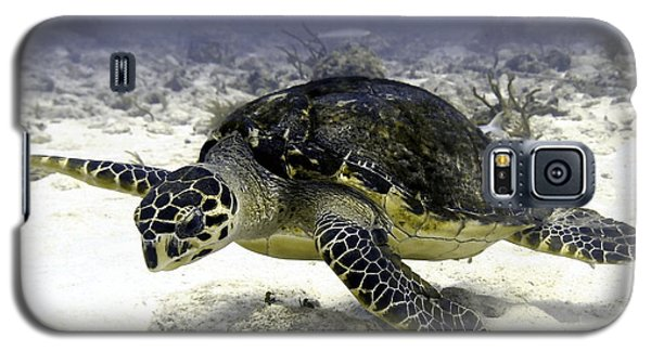 Hawksbill Caribbean Sea Turtle Galaxy S5 Case by Amy McDaniel