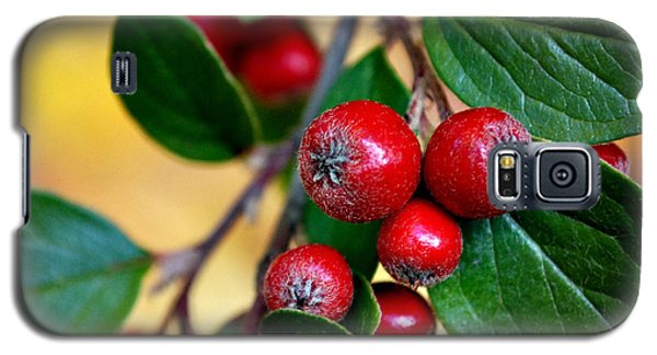 Hawthorn Berries Galaxy S5 Case by Kjirsten Collier