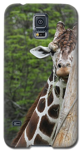 Galaxy S5 Case featuring the photograph Hay Not Just For Horses by Judy Whitton