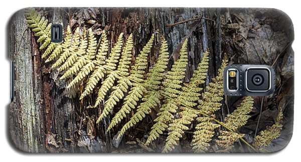 Galaxy S5 Case featuring the photograph Hay-scented Fern by Andrew Pacheco