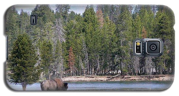 Hayden Valley Bison Galaxy S5 Case