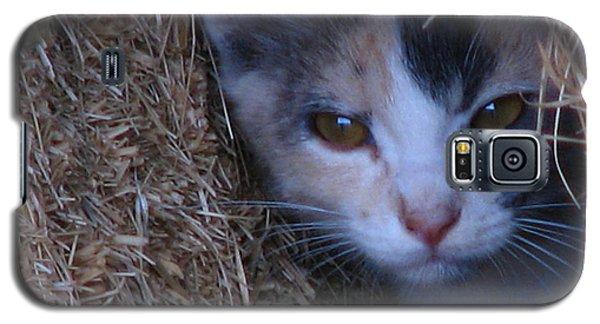Haystack Cat Galaxy S5 Case by Greg Patzer