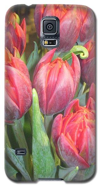 Hazardous Beauty Galaxy S5 Case