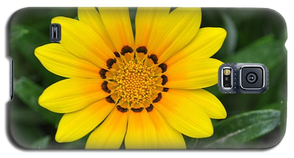 Galaxy S5 Case featuring the photograph He Loves Me  He Loves Me Not by Lew Davis