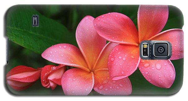 He Pua Laha Ole Hau Oli Hau Oli Oli Pua Melia Hae Maui Hawaii Tropical Plumeria Galaxy S5 Case