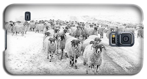 Sheep Galaxy S5 Case - Heading For Home by Janet Burdon