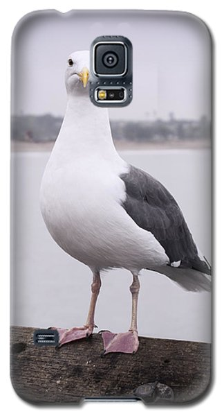 Hears Looking At You Galaxy S5 Case