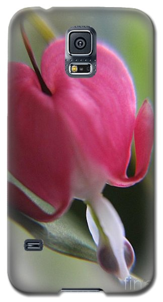 Heart For You Galaxy S5 Case by Yumi Johnson