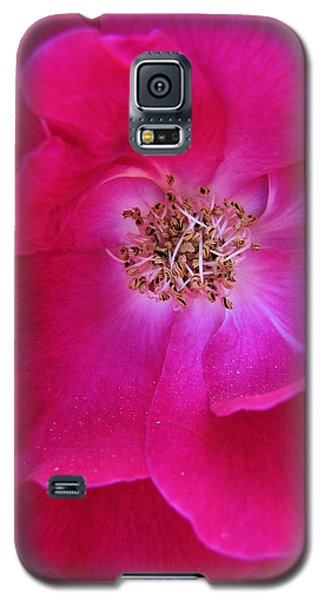 Heart Of The Rose 1 Galaxy S5 Case