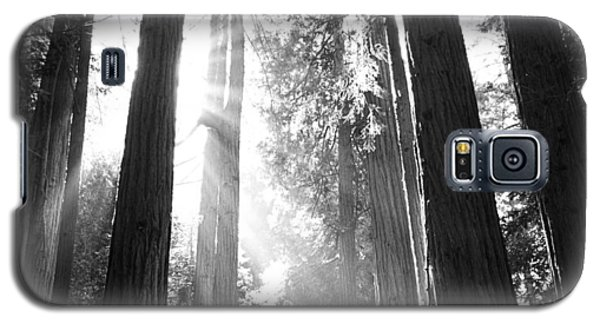 Heavenly Forest Galaxy S5 Case