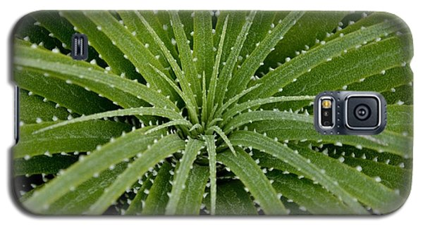 Galaxy S5 Case featuring the photograph Hechtia Argentea by Scott Lyons