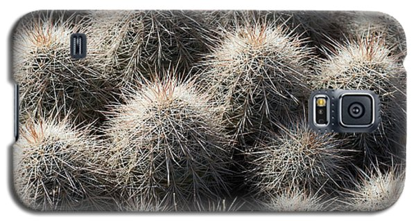 Galaxy S5 Case featuring the photograph Hedgehog Cactus by Avian Resources